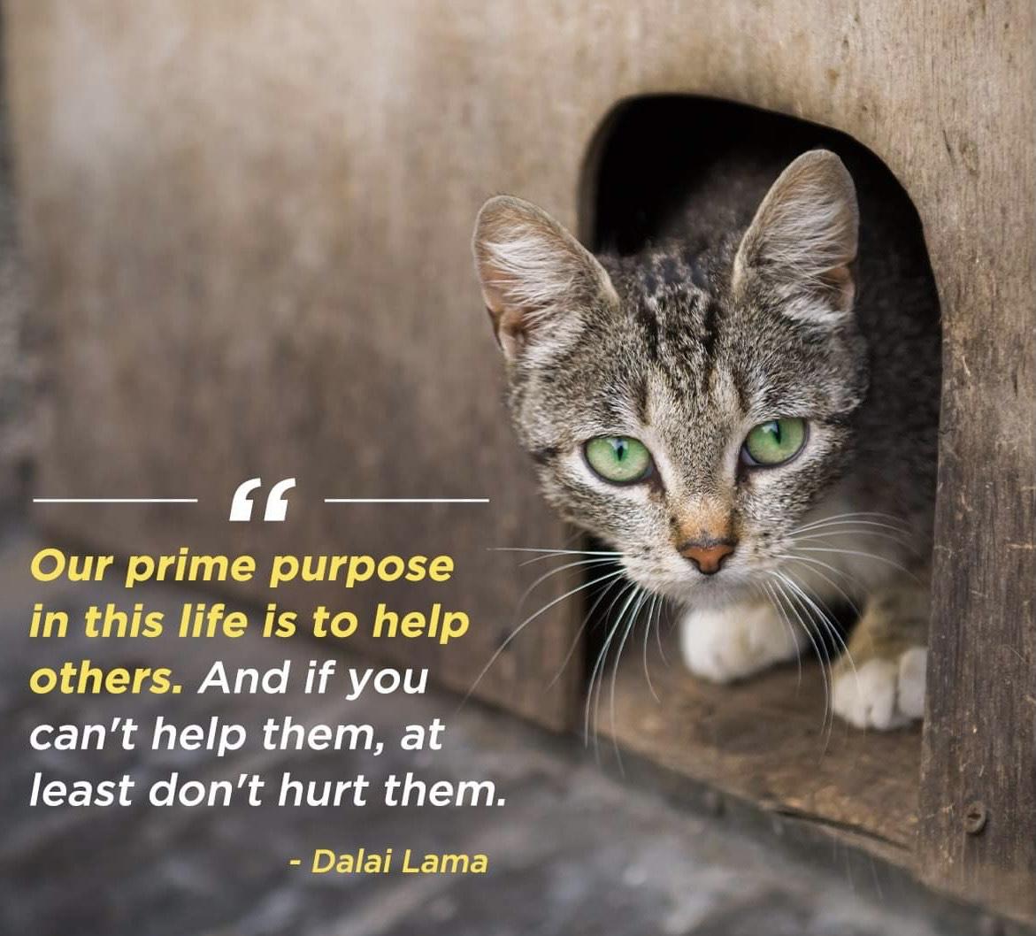 Prime Purpose image